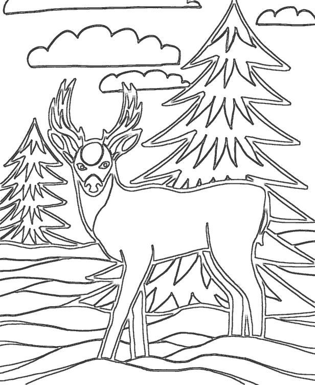 Раскраска Олень в лесу среди елок. Скачать Олень.  Распечатать Дикие животные
