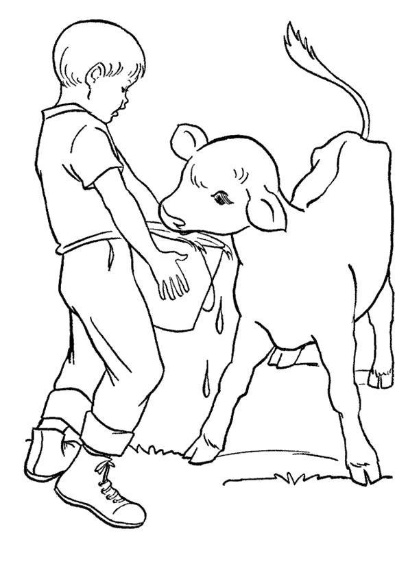 Раскраска В деревне у бабушки. . Мальчик кормит теленка. Скачать Теленок.  Распечатать Домашние животные