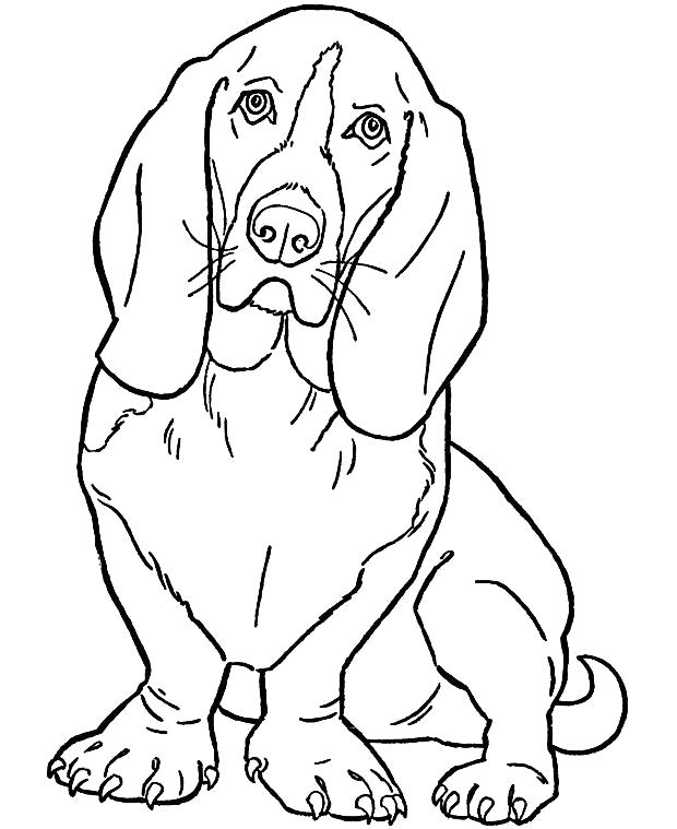 Раскраска Ушастая собачка. Скачать Собаки.  Распечатать Собаки