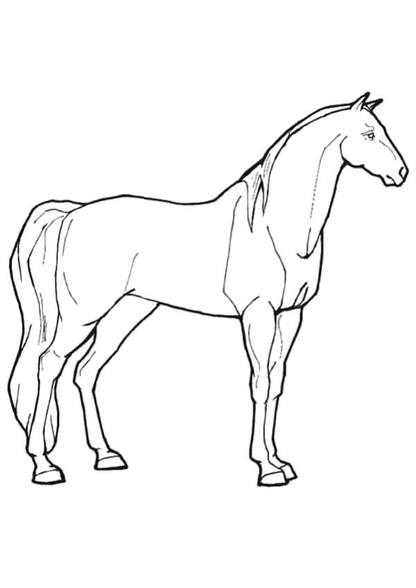 Раскраска рисунок лошади . Скачать Лошадь.  Распечатать Домашние животные
