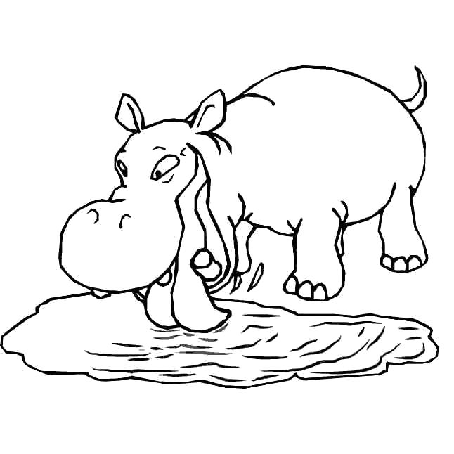 Раскраска Бегемот пьет воду. Скачать бегемот.  Распечатать Дикие животные