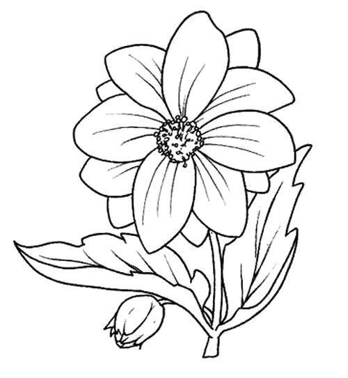 Раскраска  Широкий цветок. Скачать Цветы.  Распечатать Цветы