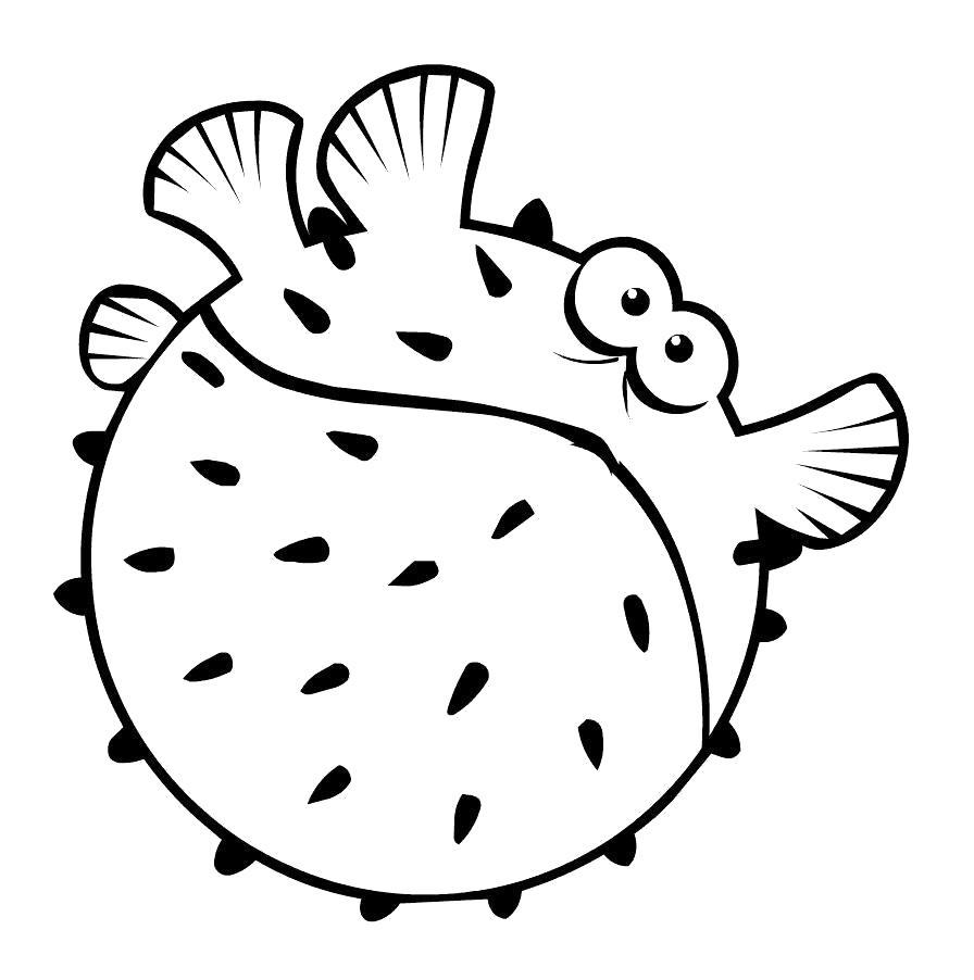 Раскраска  рыба. рыба еж надулась. Скачать рыба.  Распечатать Рыбы
