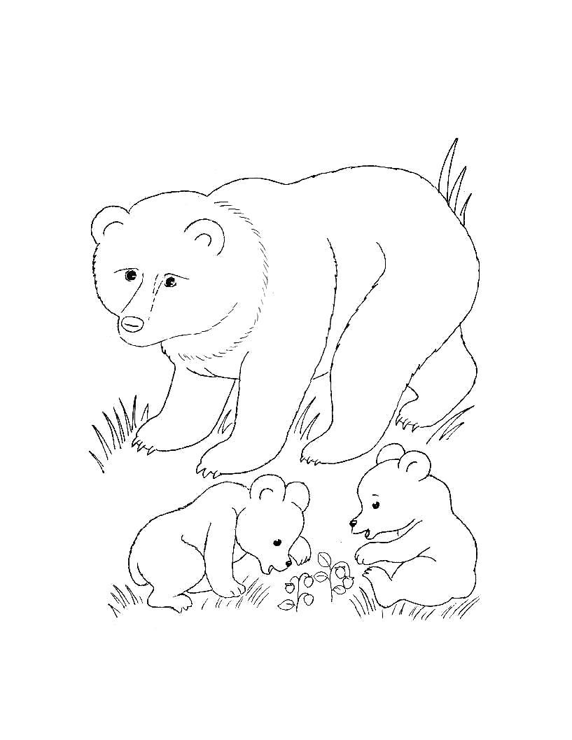 Раскраска  для самых маленьких - Дикие животные. Медведь с медвежатами. Скачать медведь.  Распечатать Дикие животные