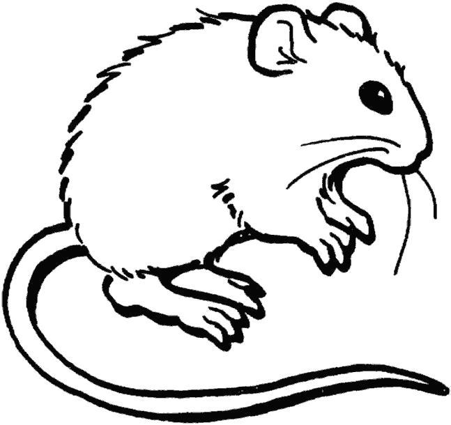 Раскраска мышка. Скачать мышь.  Распечатать Дикие животные