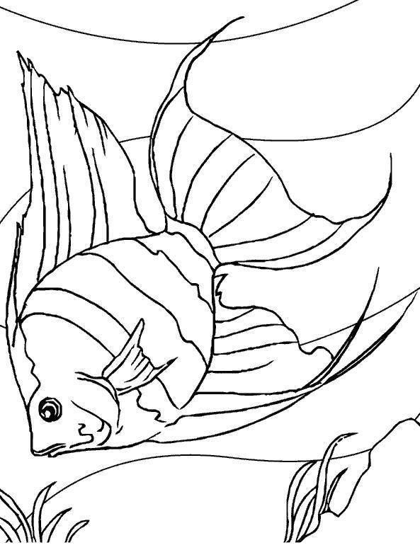 Раскраска Чудесная рыба. Скачать .  Распечатать