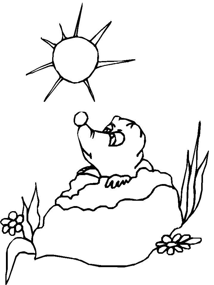Раскраска  Ежик под солнцем. Скачать ежик.  Распечатать Ежик