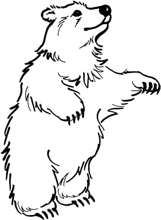 Раскраска танцующий медведь. Скачать медведь.  Распечатать Дикие животные