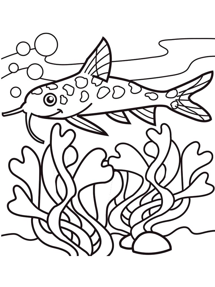 Раскраска  сом, рыба. Скачать .  Распечатать