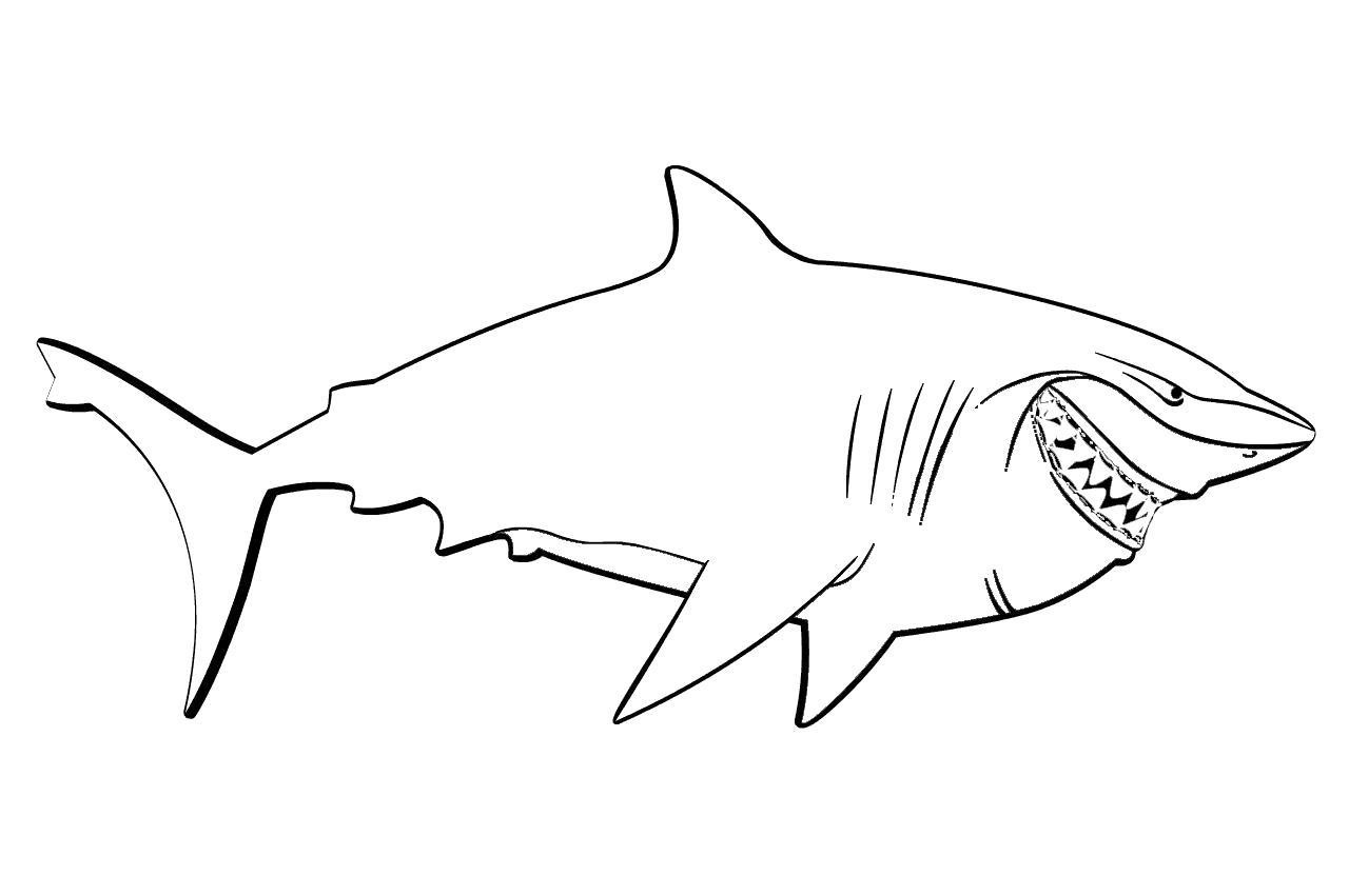Раскраска  Акула Брюс. Скачать Акула.  Распечатать Морские животные