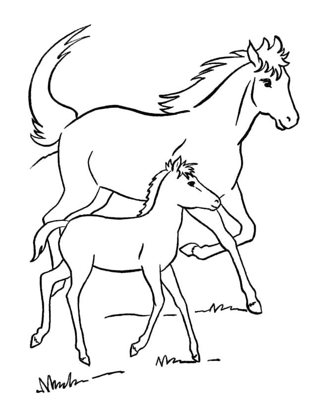 Раскраска лошадь и жеребенок . Скачать Лошадь.  Распечатать Домашние животные