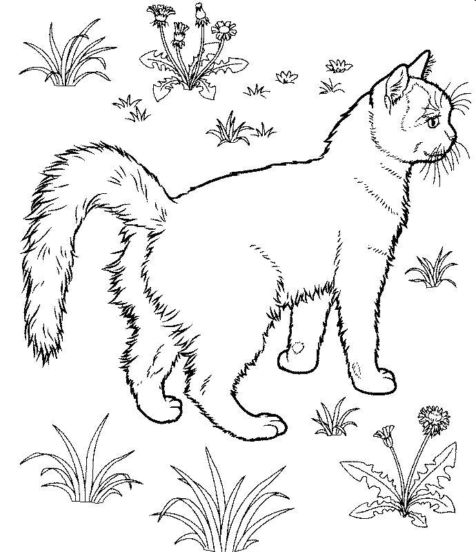 Раскраска  дикая кошка в поле. Скачать кошка.  Распечатать Домашние животные