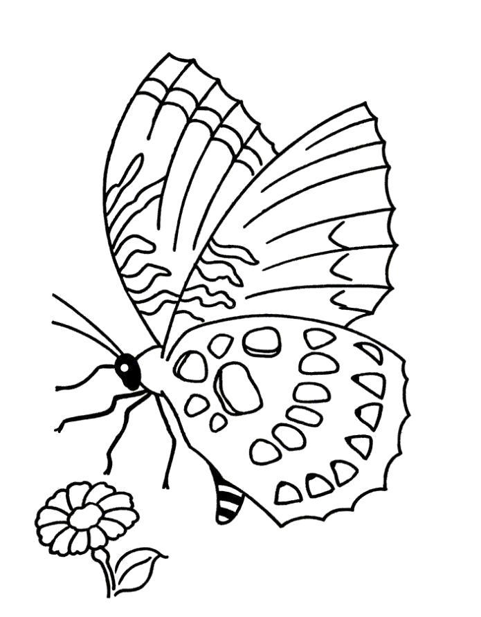 Раскраска Разукрашка бабочка детская. Скачать бабочка.  Распечатать бабочка