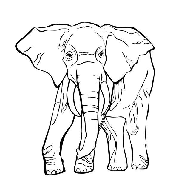 Раскраска индийский слон. Скачать слон.  Распечатать Дикие животные