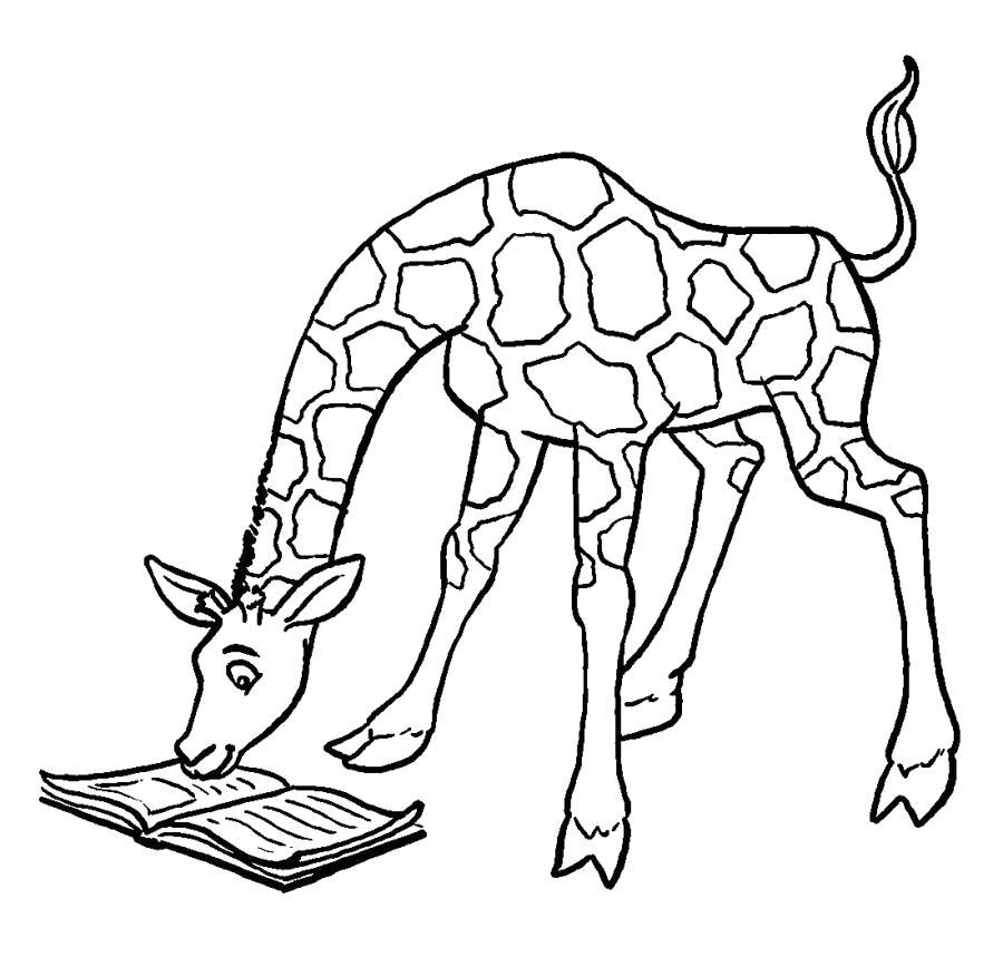 Раскраска Жираф читает книгу . Скачать жираф.  Распечатать Дикие животные