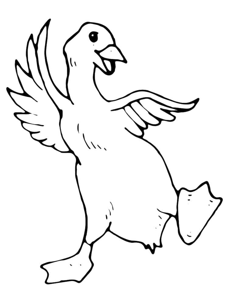 Раскраска  утка. Скачать Утка.  Распечатать Домашние животные