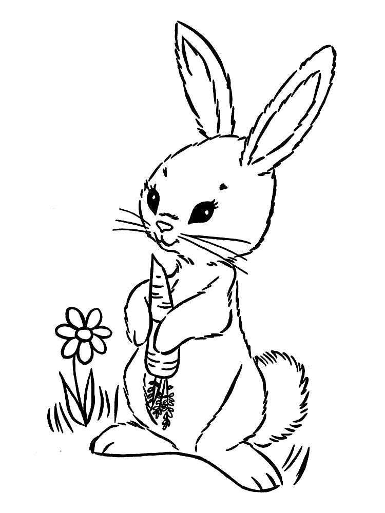 Раскраска Зайка любит морковку. Скачать Зайка.  Распечатать Зайка