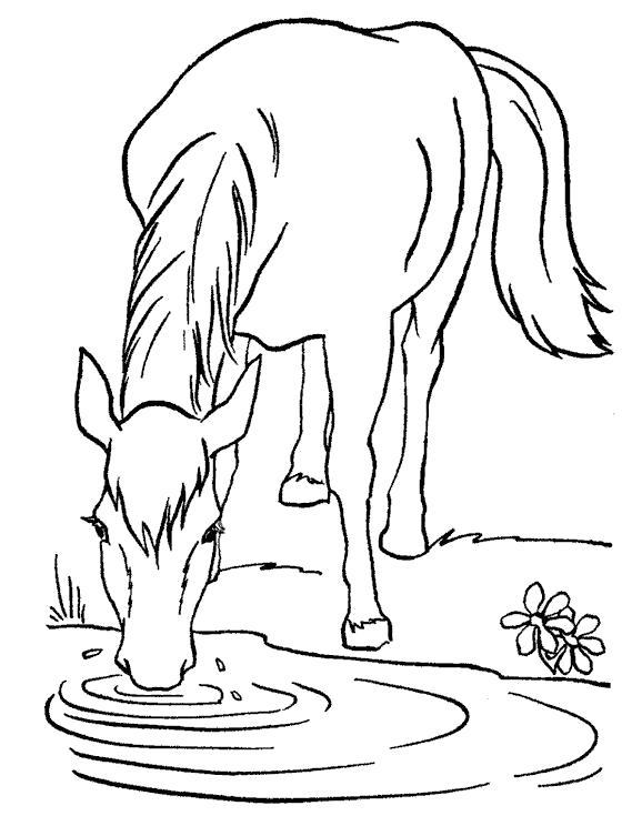 Раскраска Лошадь пьет. Скачать Лошадь.  Распечатать Домашние животные