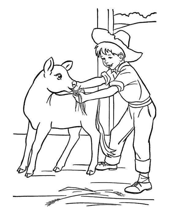 Раскраска ферма, мальчик кормит буренка. Скачать .  Распечатать