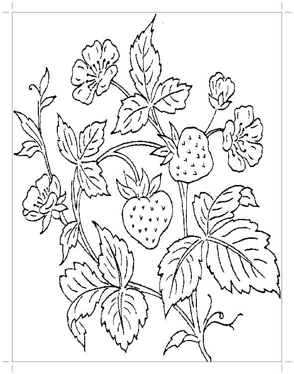 Раскраска Земляничный куст с ягодами, листьями и цветочками. Скачать куст.  Распечатать куст