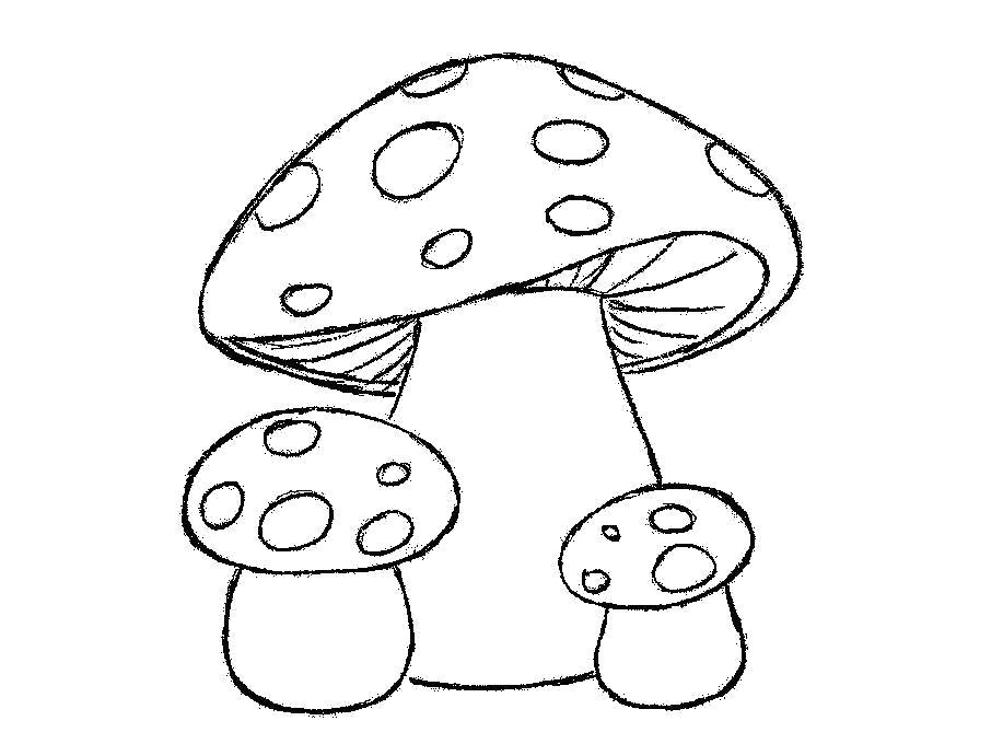 Раскраска  шаблон гриба мухоморы для аппликаций, заготовки из бумаги. Скачать гриб.  Распечатать растения