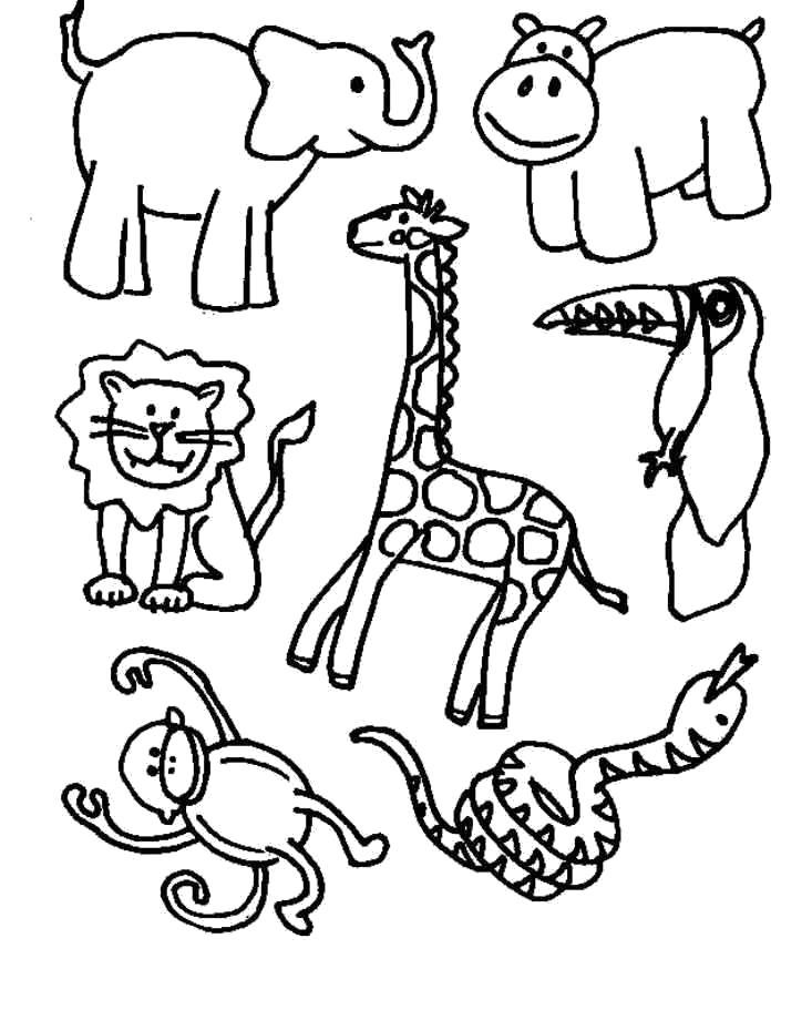 Раскраска Животные из зоопарка. Скачать .  Распечатать
