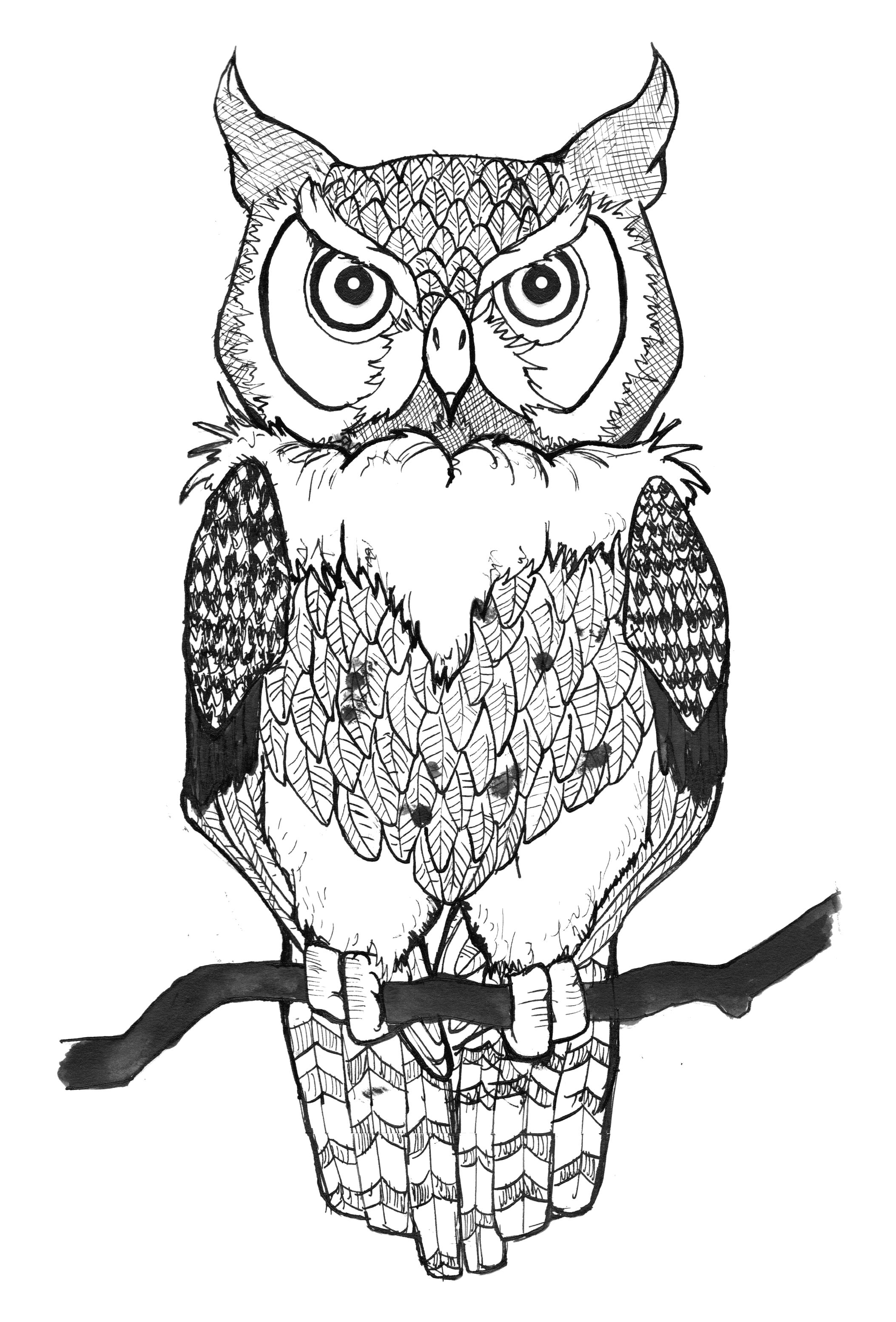 Раскраска нарисованные совы картинки . Скачать Сова.  Распечатать Сова