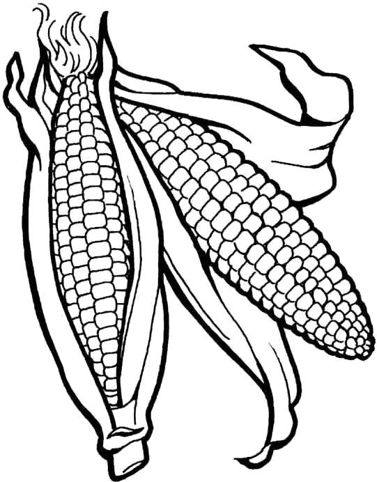 Раскраска Кукуруза. Скачать кукуруза.  Распечатать овощи