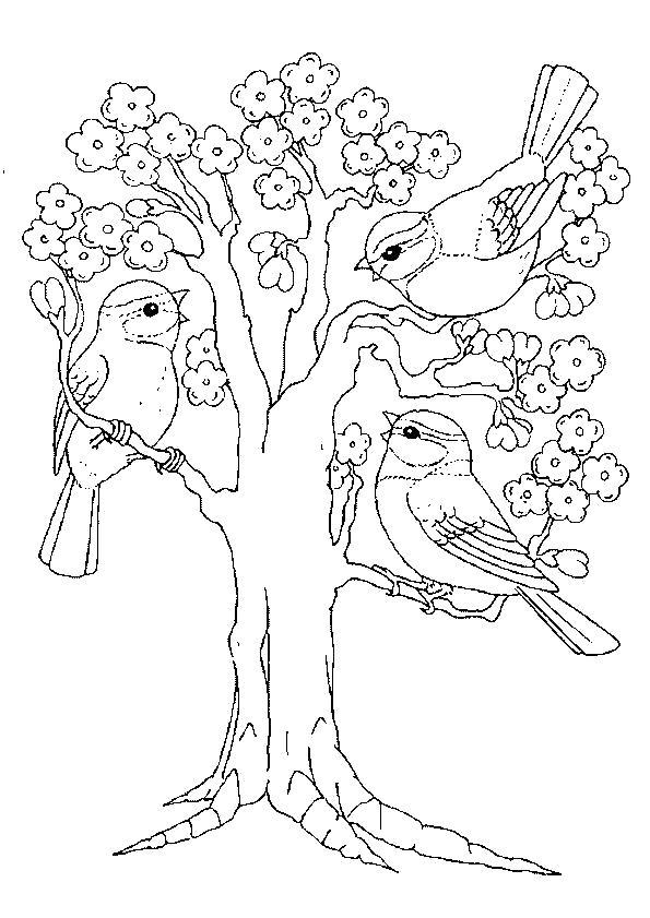 Раскраска Воробьи на дереве. Скачать деревья.  Распечатать деревья