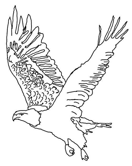 Раскраска Гордый орёл. Скачать .  Распечатать
