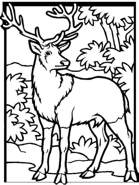 Раскраска Олень в лесу. Скачать Олень.  Распечатать Дикие животные