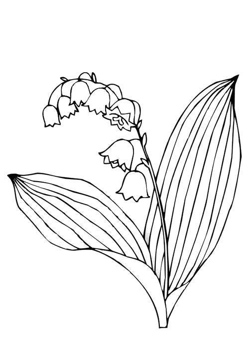 Раскраска  Майские ландыши. Скачать Цветы.  Распечатать Цветы