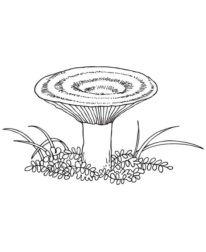 Раскраска Рыжик   грибы. Скачать гриб.  Распечатать растения