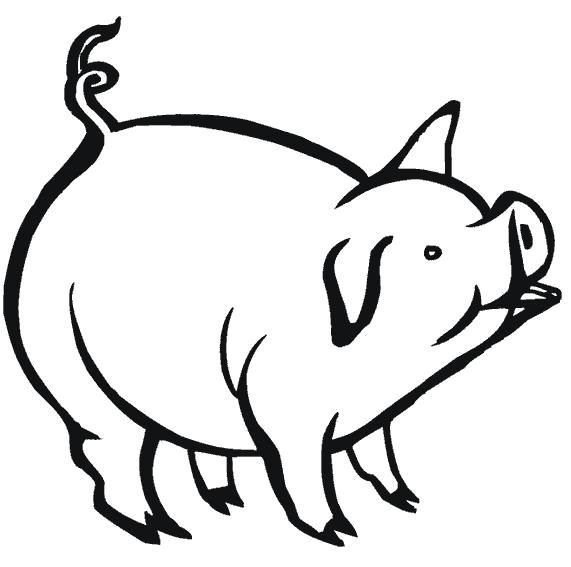 Раскраска Пухлый свин. Скачать Свинья.  Распечатать Домашние животные