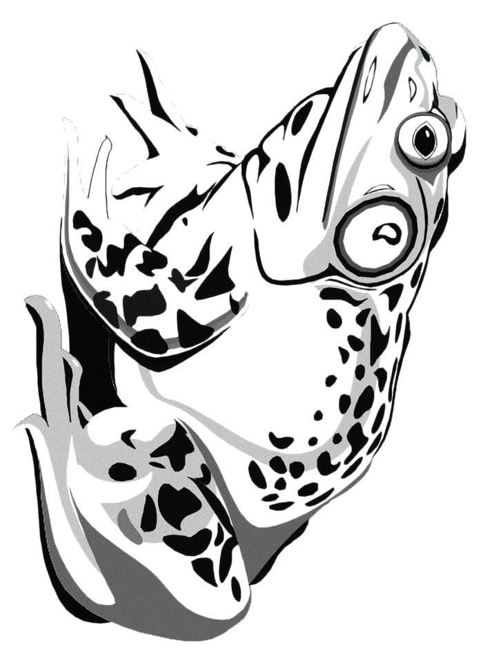 Раскраска  Красивая лягушка. Скачать лягушка.  Распечатать лягушка