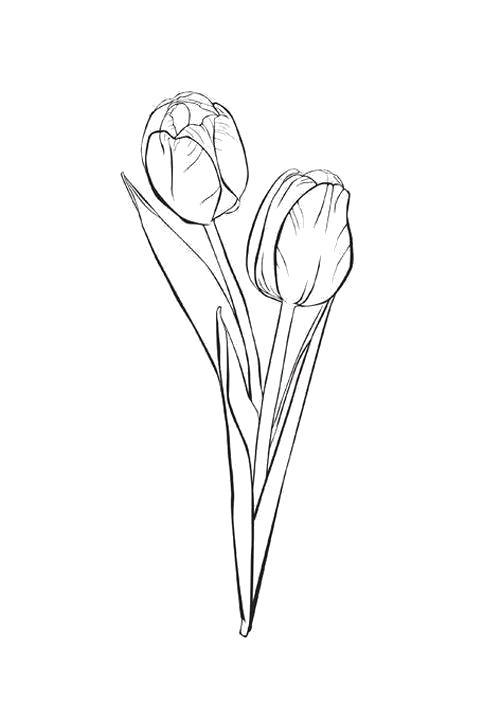 Раскраска  Два тюльпана. Скачать Цветы.  Распечатать Цветы