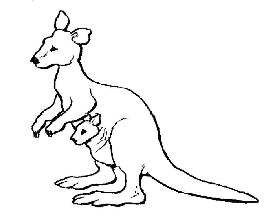 Раскраска  Кенгуру для детей. Скачать кенгуру.  Распечатать кенгуру