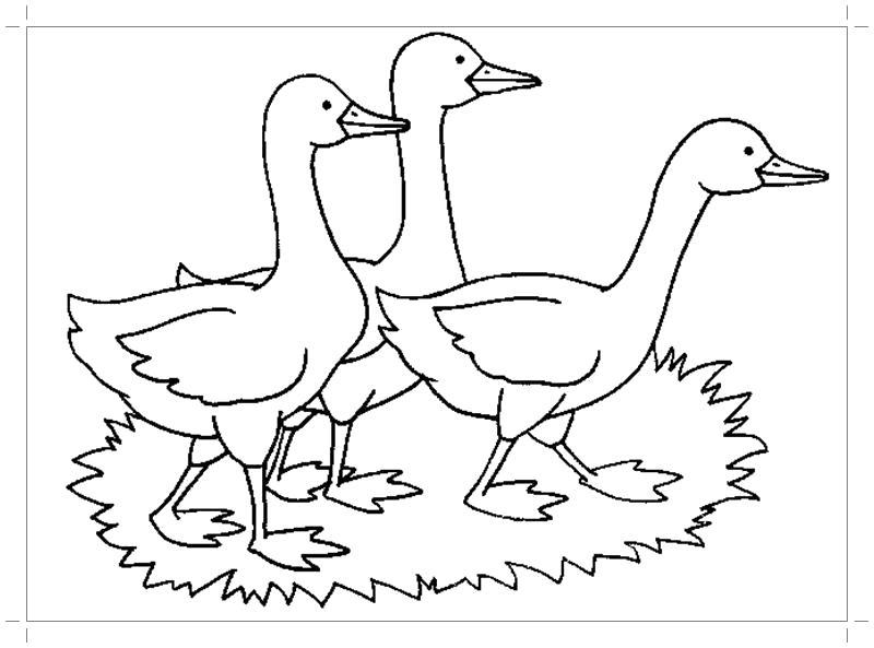 Раскраска  к сказке гуси лебеди. Скачать гуси лебеди.  Распечатать сказки