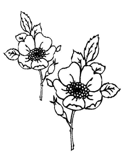 Раскраска  Два цветочка и листья. Скачать Цветы.  Распечатать Цветы