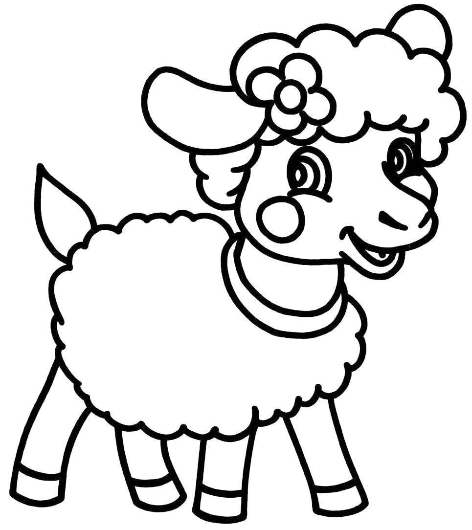 Раскраска овечка. Скачать Овца.  Распечатать Домашние животные