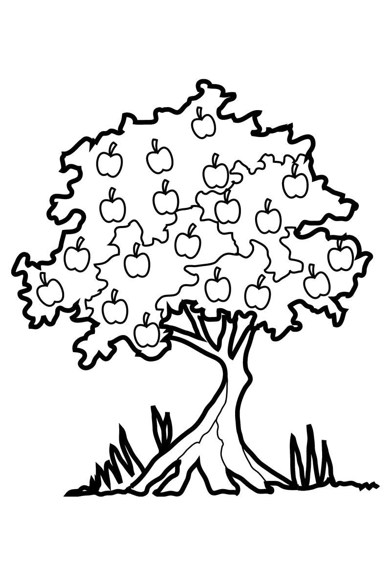 Раскраска  яблоня. Скачать деревья.  Распечатать деревья