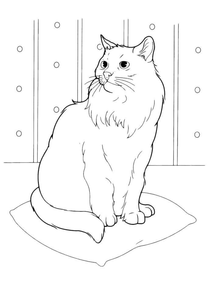 Раскраска  Белая кошка. Скачать кошка.  Распечатать кошка