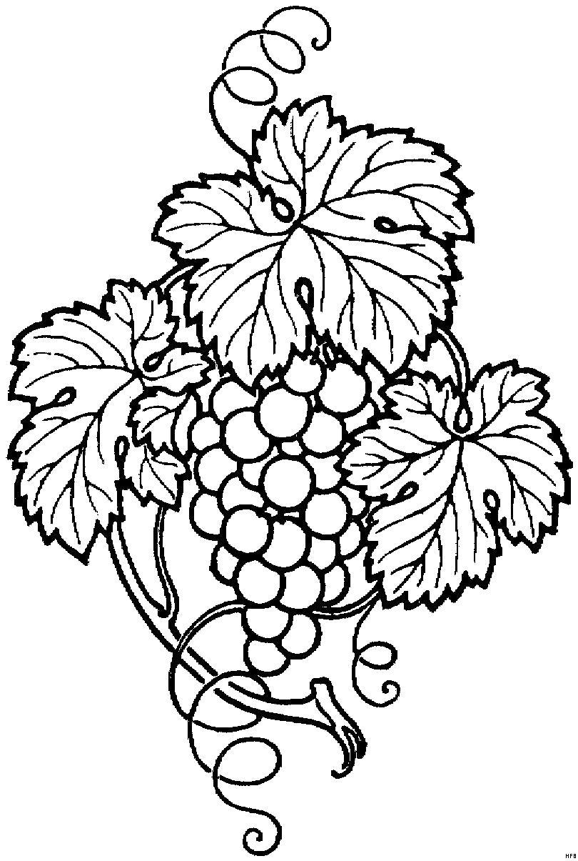 Раскраска Рисунки для витражных красок, виноград . Скачать виноград.  Распечатать ягоды