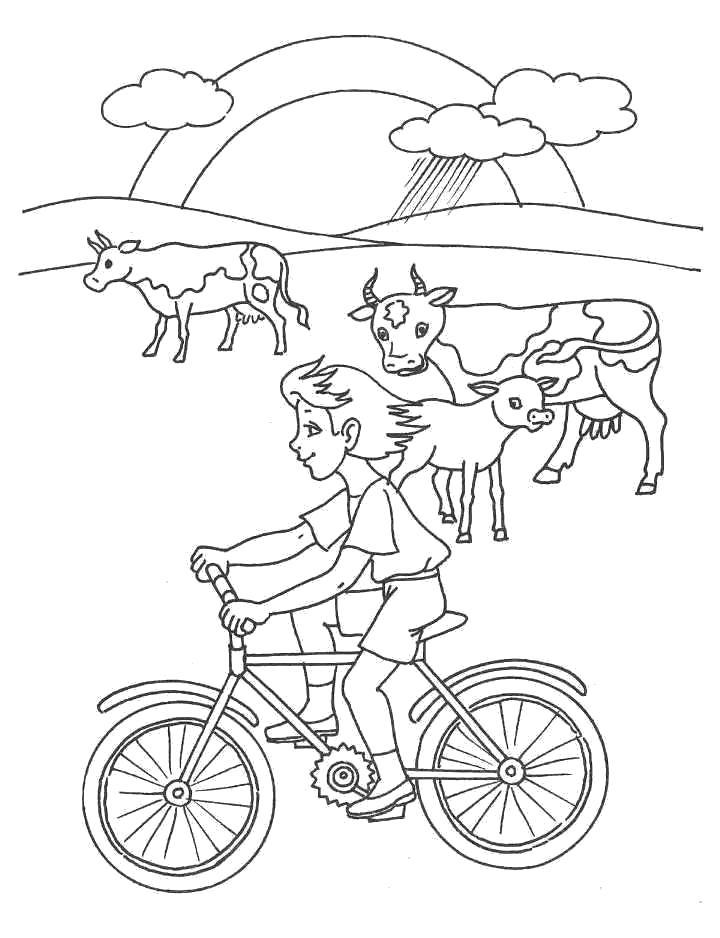 Раскраска девочка едет на велосипеде, коровы посутся на лугу. Скачать Лето.  Распечатать Лето