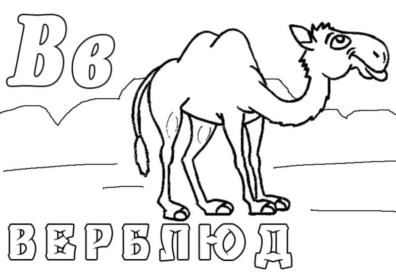 """Раскраска  """"зоопарк"""" скачать и распечатать бесплатно. Буква В верблюд. Скачать .  Распечатать"""