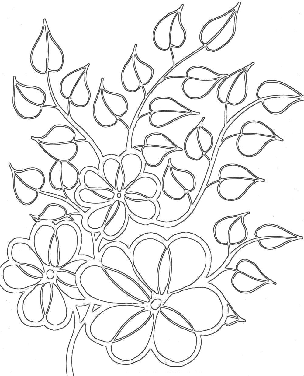 Раскраска Цветы и листья. Скачать .  Распечатать
