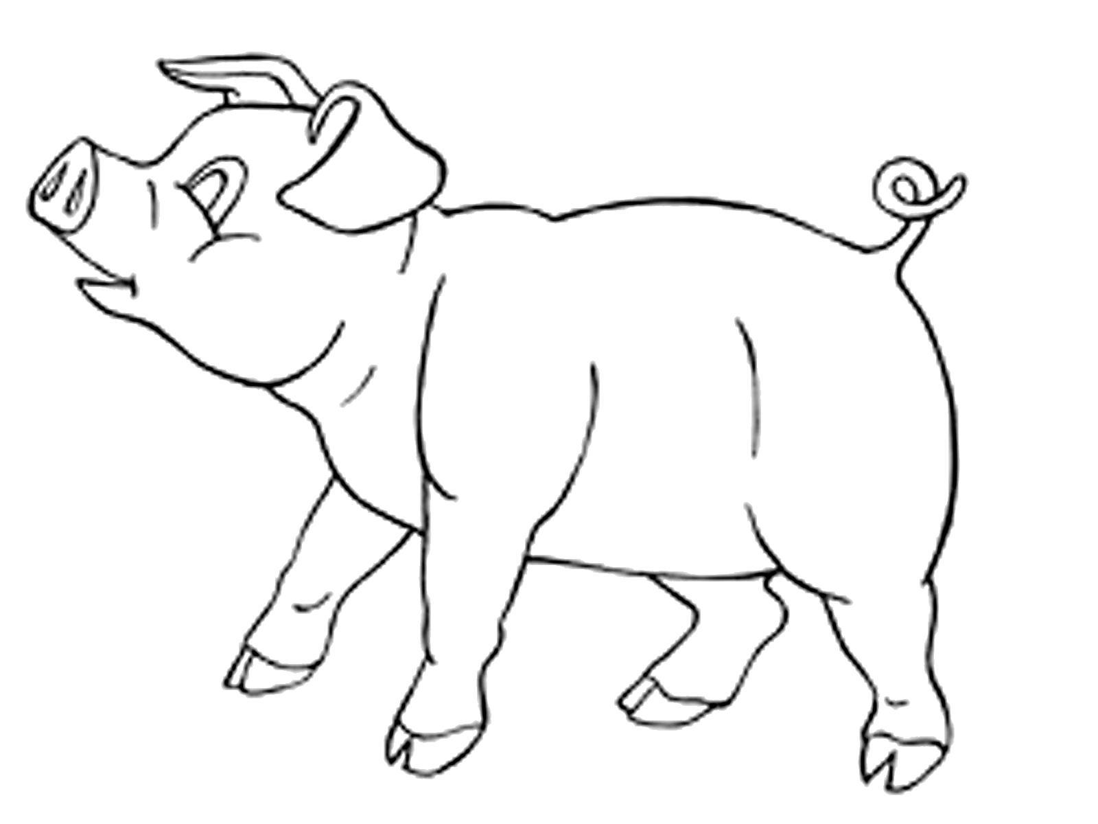 Раскраска  домашние животные поросенок. Скачать Свинья.  Распечатать Домашние животные