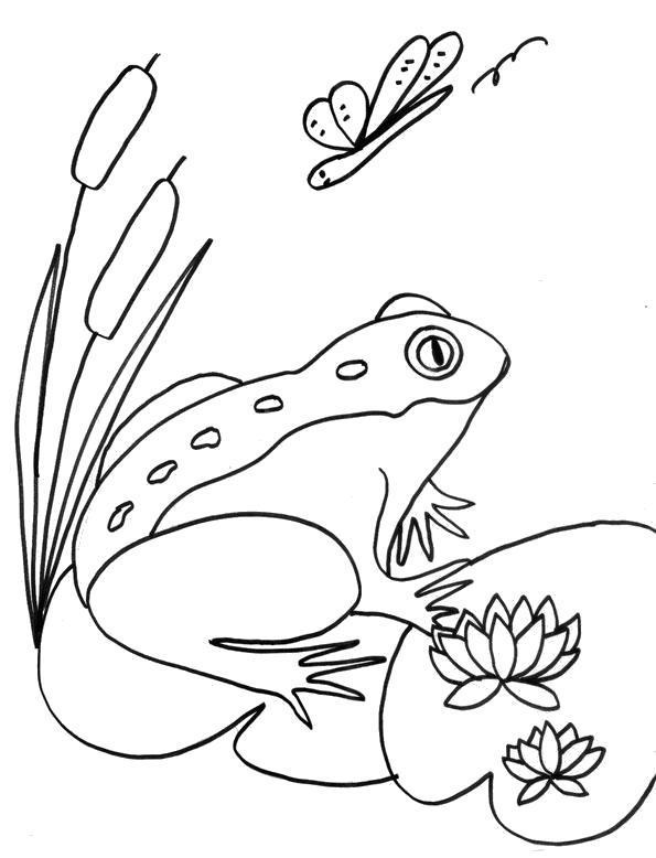 Раскраска Жаба на болоте . Скачать .  Распечатать