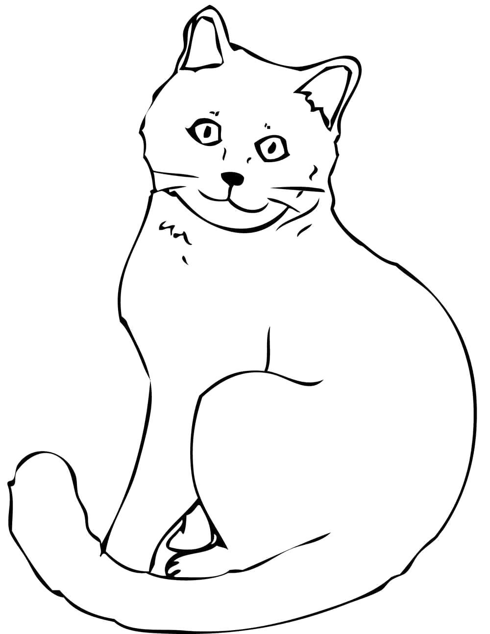 Раскраска  кошка обычная. Скачать кошка.  Распечатать Домашние животные