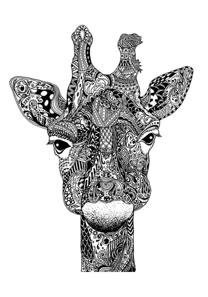 Раскраска  антистресс жираф. Скачать жираф.  Распечатать Дикие животные